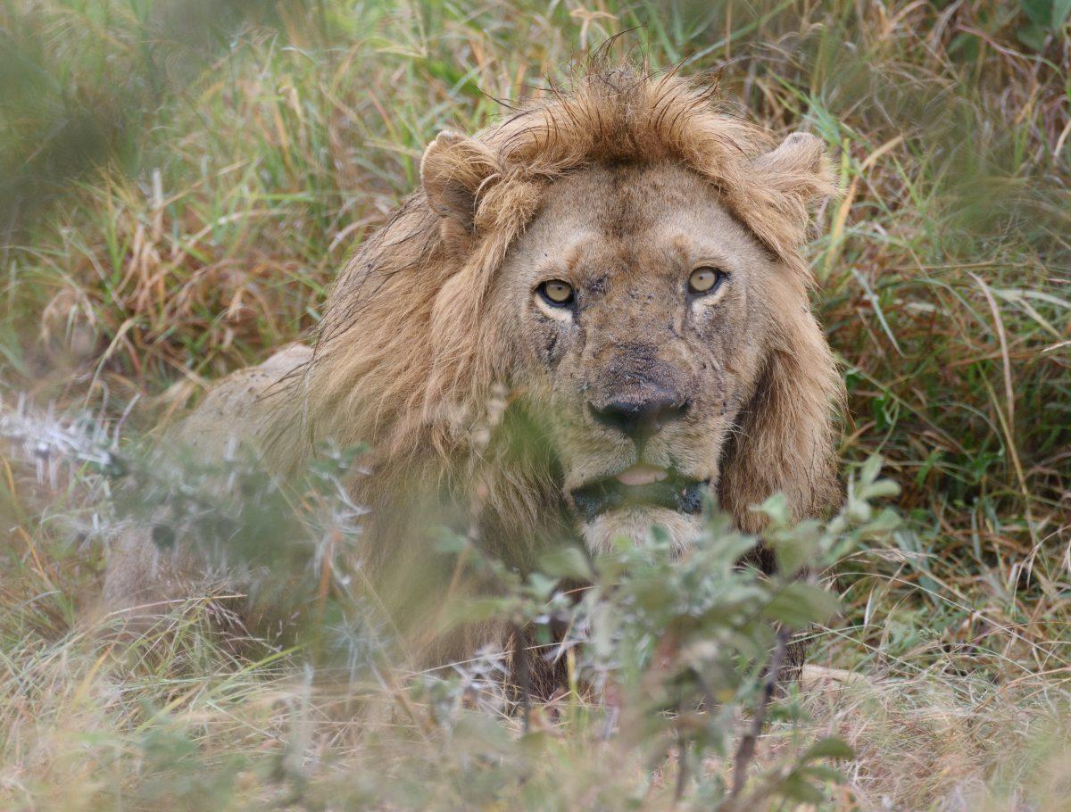 Tanzania Day 5: Western to Central Serengeti