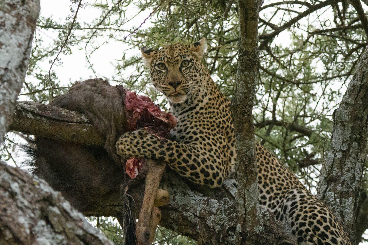 Tanzania Day 6: Central Serengeti